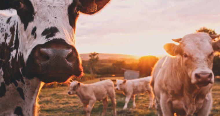 Over het houden van dieren door boeren